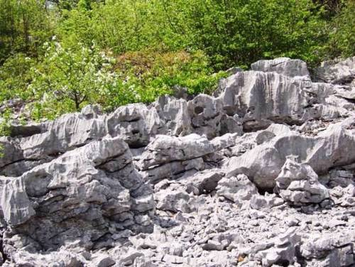 Esempio di roccia calcarea in Carso